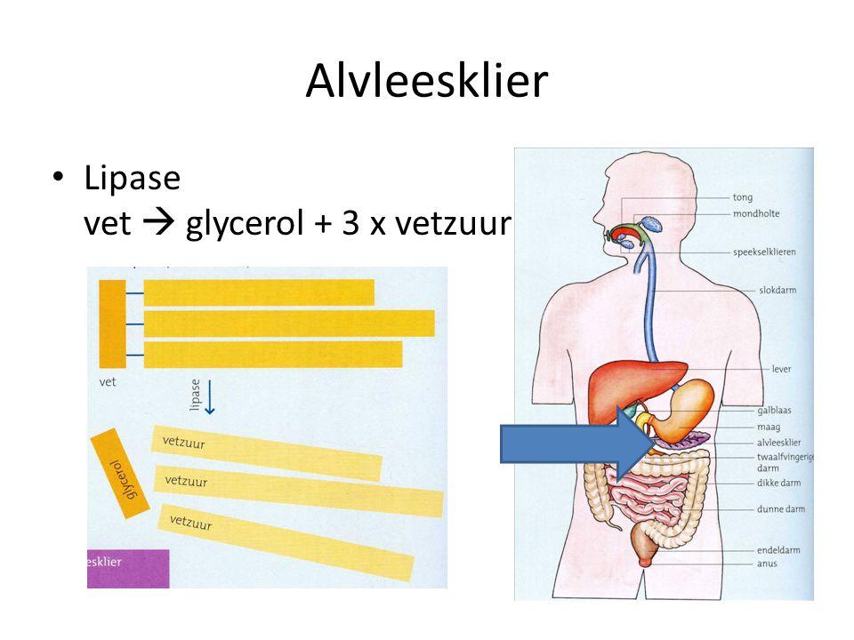 Alvleesklier Lipase vet  glycerol + 3 x vetzuur