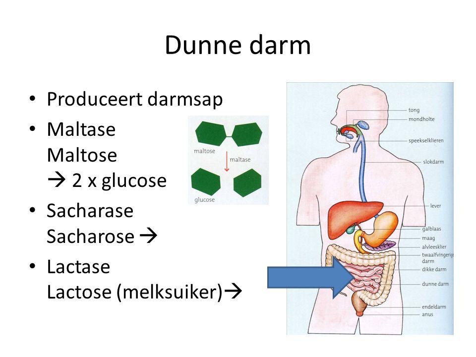 Dunne darm Produceert darmsap Maltase Maltose  2 x glucose Sacharase Sacharose  Lactase Lactose (melksuiker) 