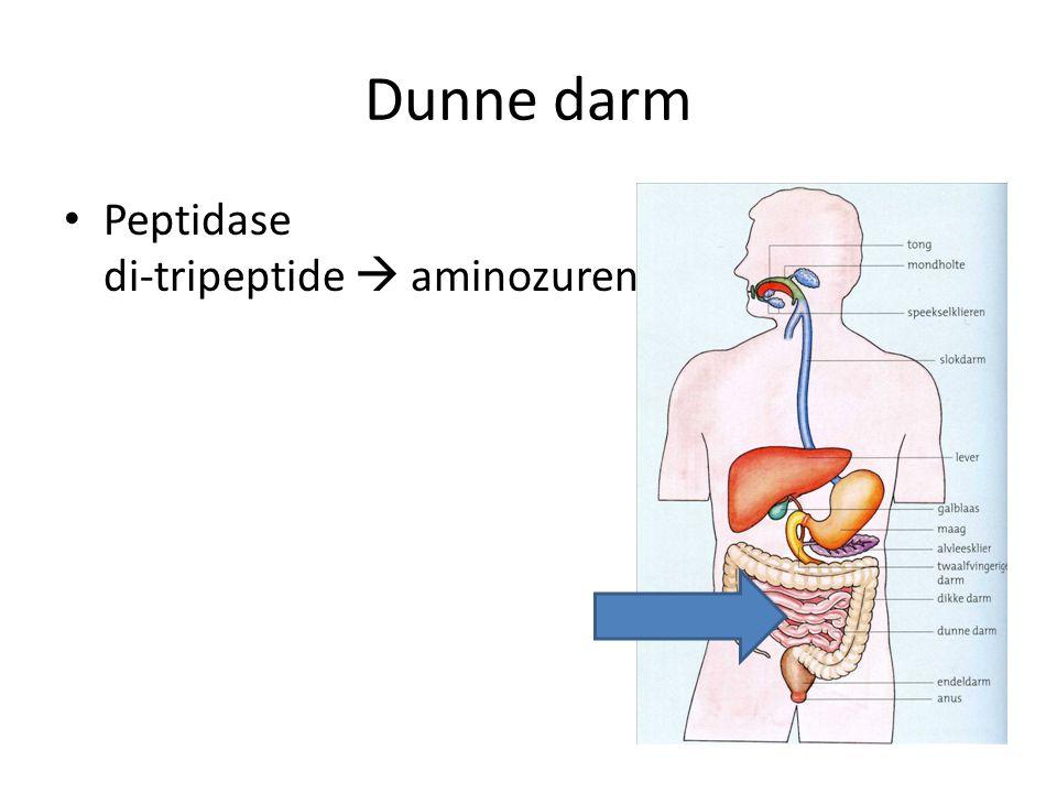 Dunne darm Peptidase di-tripeptide  aminozuren