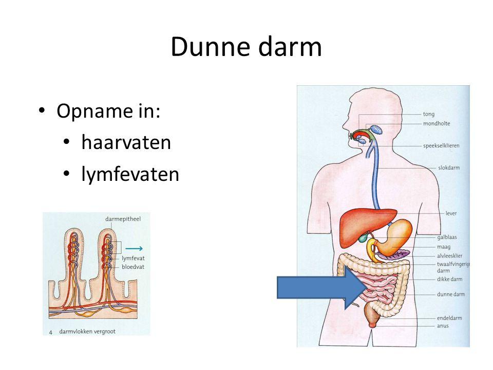 Dunne darm Opname in: haarvaten lymfevaten