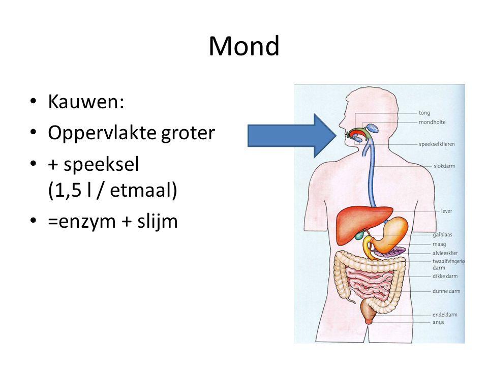 Mond Kauwen: Oppervlakte groter + speeksel (1,5 l / etmaal) =enzym + slijm