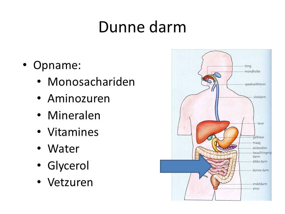 Dunne darm Opname: Monosachariden Aminozuren Mineralen Vitamines Water Glycerol Vetzuren