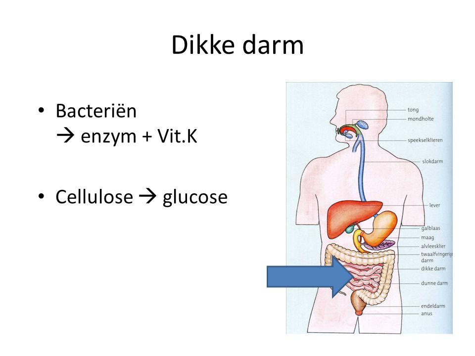 Dikke darm Bacteriën  enzym + Vit.K Cellulose  glucose
