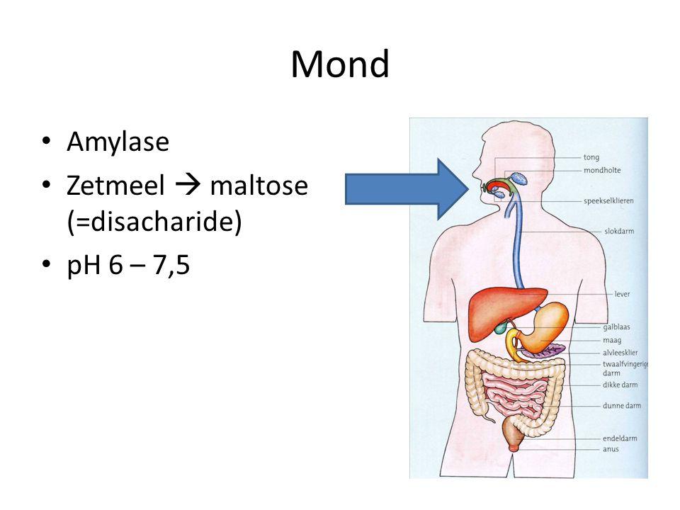 Mond Amylase Zetmeel  maltose (=disacharide) pH 6 – 7,5