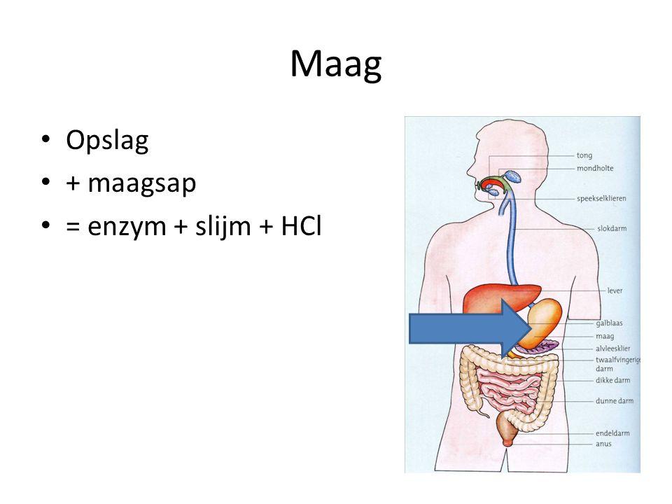 Maag Opslag + maagsap = enzym + slijm + HCl