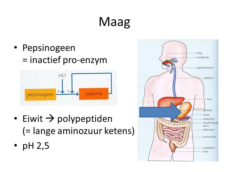 Maag Pepsinogeen = inactief pro-enzym Eiwit  polypeptiden (= lange aminozuur ketens) pH 2,5