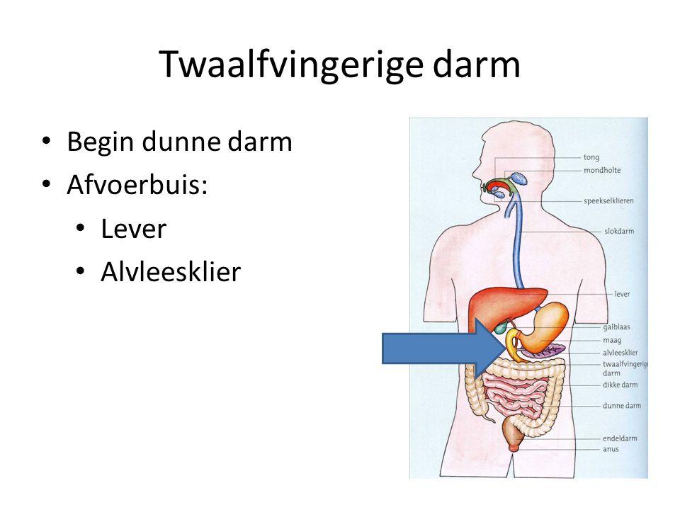 Twaalfvingerige darm Begin dunne darm Afvoerbuis: Lever Alvleesklier