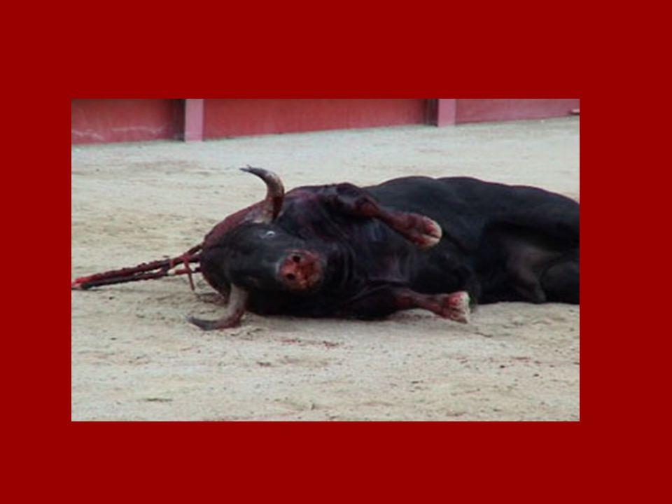 Stierenvechten = DODEN VOOR DE LOL Misschien heb je wel eens gehoord dat het stierenvechten kunst is, maar dat is het niet… Het is MARTELING. Er is ni