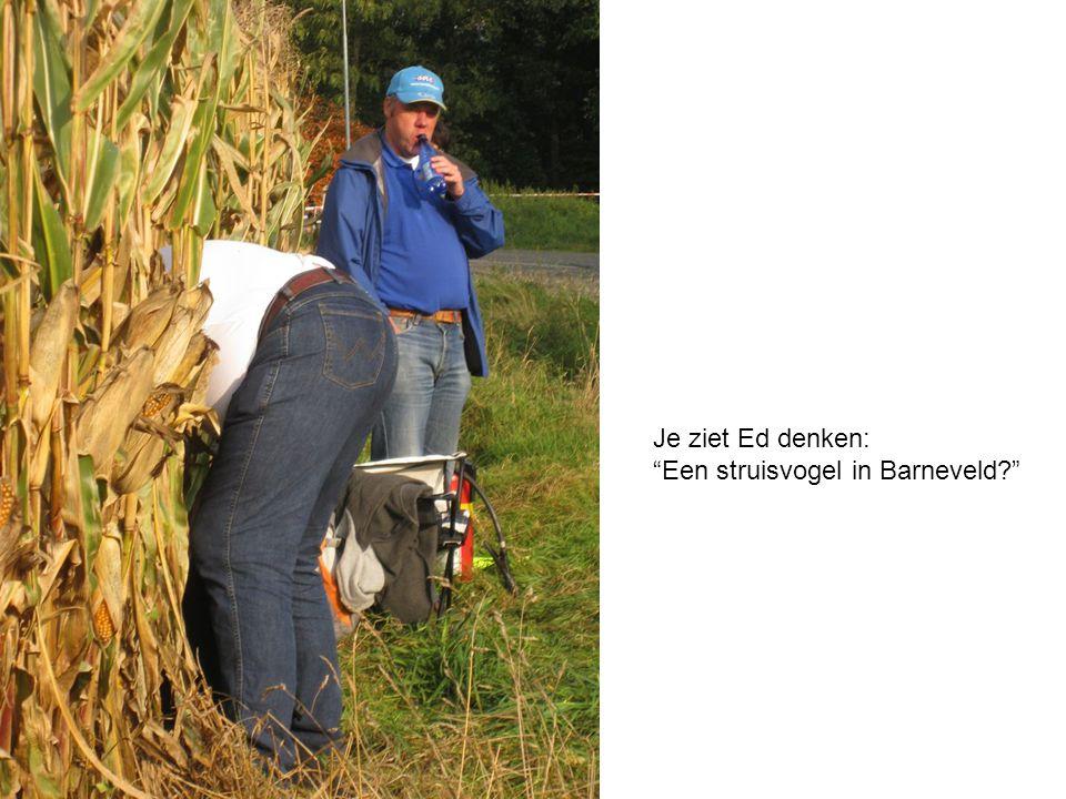 """Je ziet Ed denken: """"Een struisvogel in Barneveld?"""""""
