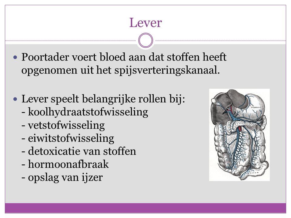 Lever Poortader voert bloed aan dat stoffen heeft opgenomen uit het spijsverteringskanaal.
