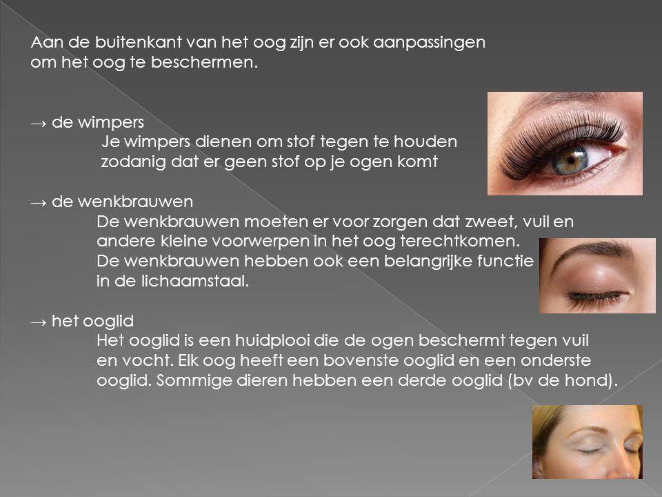 Aan de buitenkant van het oog zijn er ook aanpassingen om het oog te beschermen. → de wimpers Je wimpers dienen om stof tegen te houden zodanig dat er