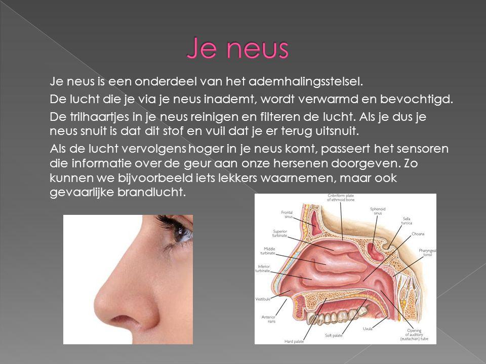 Je neus is een onderdeel van het ademhalingsstelsel. De lucht die je via je neus inademt, wordt verwarmd en bevochtigd. De trilhaartjes in je neus rei