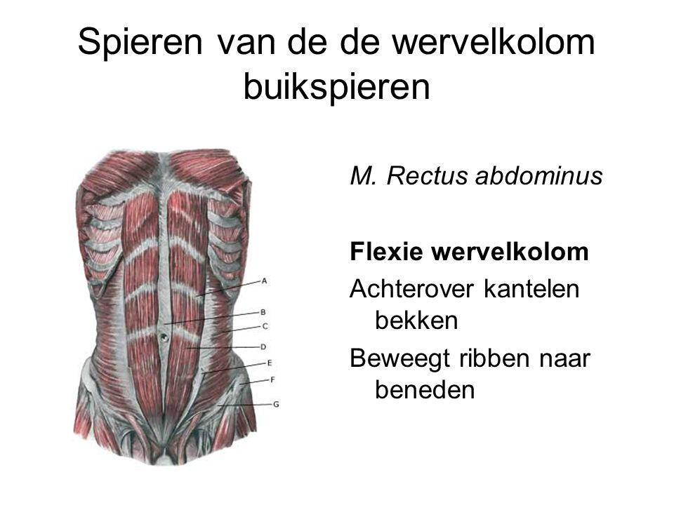 Spieren van de de wervelkolom buikspieren M. Rectus abdominus Flexie wervelkolom Achterover kantelen bekken Beweegt ribben naar beneden