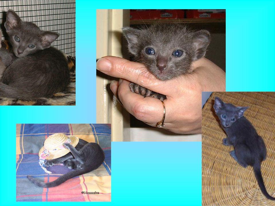 Hallo!!! Ik ben isis Een grijs klein muisje, groeien doe ik niet echt, daarom de naam: muis. Je bent de hele tijd met me bezig, spelen, aaien enzo, ma