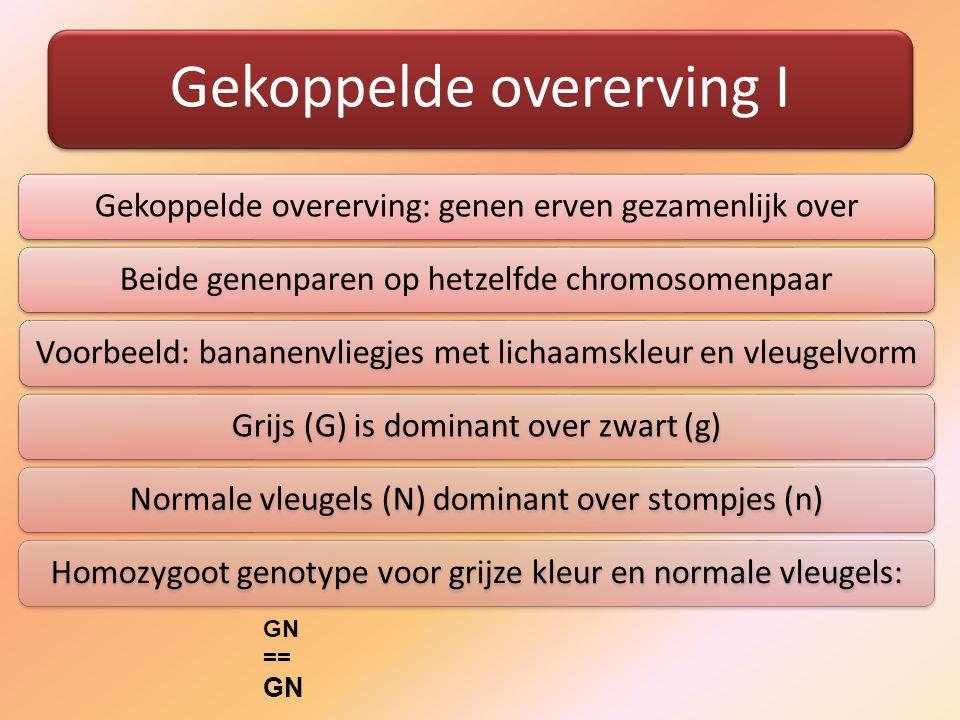 Gekoppelde overerving I Gekoppelde overerving: genen erven gezamenlijk overBeide genenparen op hetzelfde chromosomenpaarVoorbeeld: bananenvliegjes met lichaamskleur en vleugelvormGrijs (G) is dominant over zwart (g)Normale vleugels (N) dominant over stompjes (n)Homozygoot genotype voor grijze kleur en normale vleugels: GN == GN