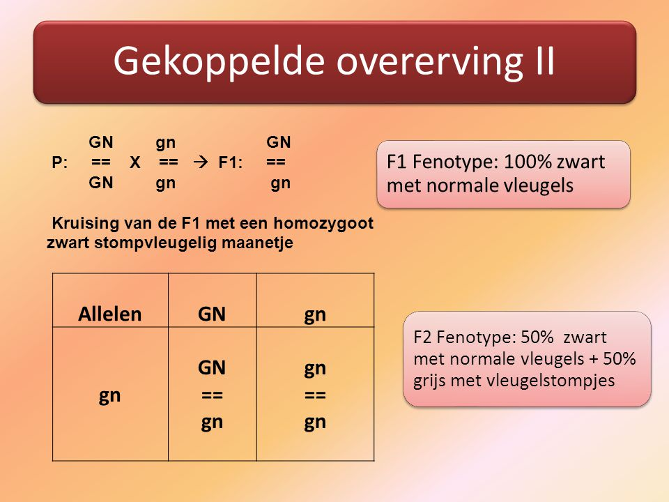 Gekoppelde overerving II GN gn GN P: == X ==  F1: == GN gn gn Kruising van de F1 met een homozygoot zwart stompvleugelig maanetje Allelen GN gn gn GN