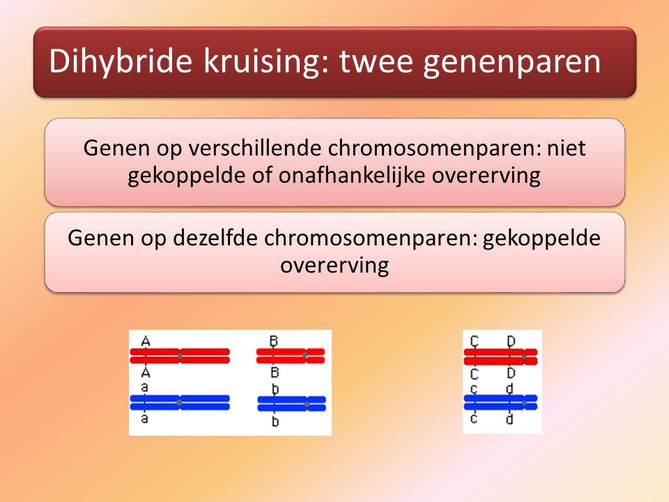 Dihybride kruising: twee genenparen Genen op verschillende chromosomenparen: niet gekoppelde of onafhankelijke overerving Genen op dezelfde chromosomenparen: gekoppelde overerving