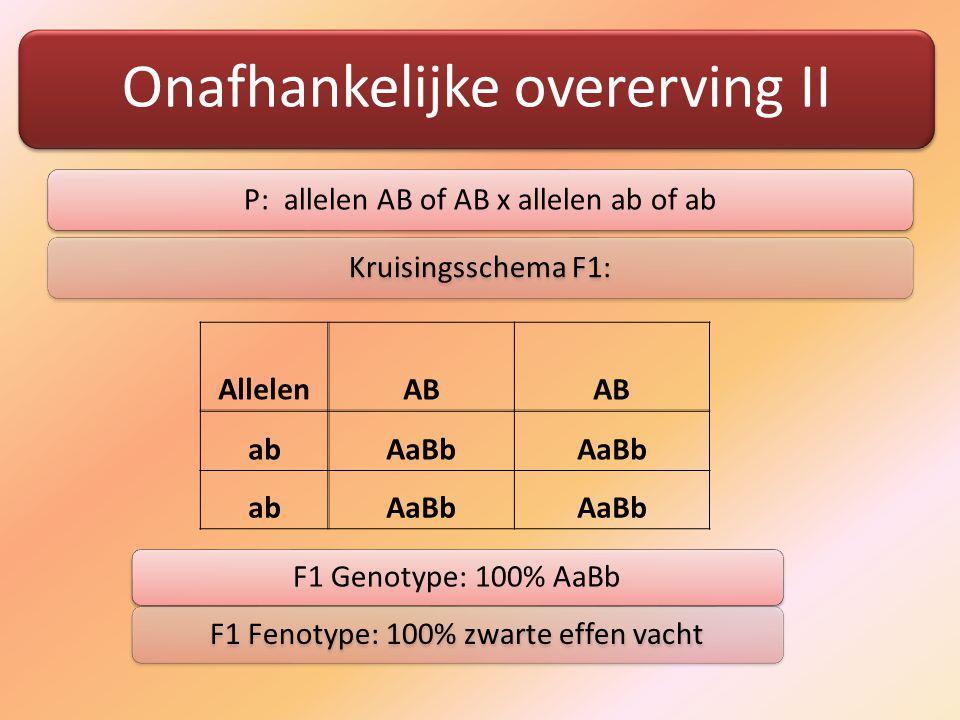 Onafhankelijke overerving II P: allelen AB of AB x allelen ab of abKruisingsschema F1: AllelenAB abAaBb abAaBb F1 Genotype: 100% AaBbF1 Fenotype: 100% zwarte effen vacht