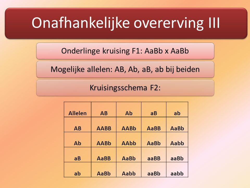 Onafhankelijke overerving III Onderlinge kruising F1: AaBb x AaBbMogelijke allelen: AB, Ab, aB, ab bij beidenKruisingsschema F2: Allelen AB Ab aB ab AB AABB AABb AaBB AaBb Ab AABb AAbb AaBb Aabb aB AaBB AaBb aaBB aaBb ab AaBb Aabb aaBb aabb