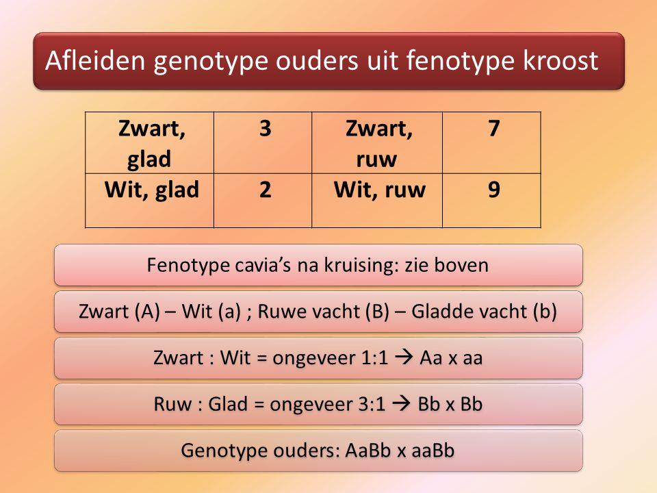 Afleiden genotype ouders uit fenotype kroost Fenotype cavia's na kruising: zie bovenZwart (A) – Wit (a) ; Ruwe vacht (B) – Gladde vacht (b)Zwart : Wit = ongeveer 1:1  Aa x aaRuw : Glad = ongeveer 3:1  Bb x BbGenotype ouders: AaBb x aaBb Zwart, glad 3 Zwart, ruw 7 Wit, glad 2 Wit, ruw 9