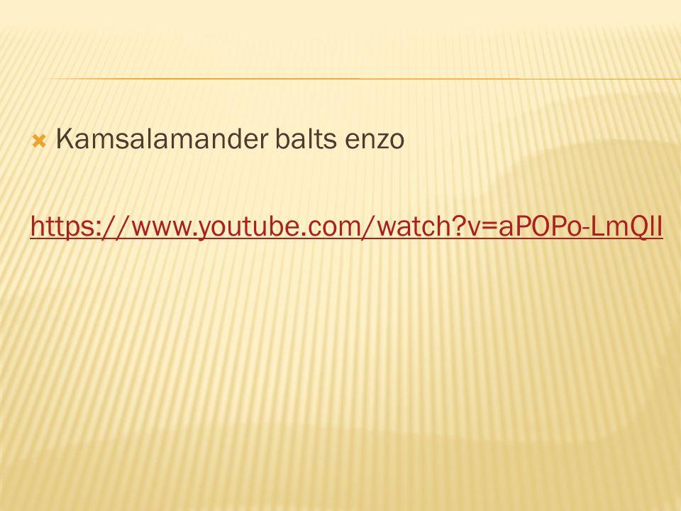  Kamsalamander balts enzo https://www.youtube.com/watch?v=aPOPo-LmQlI