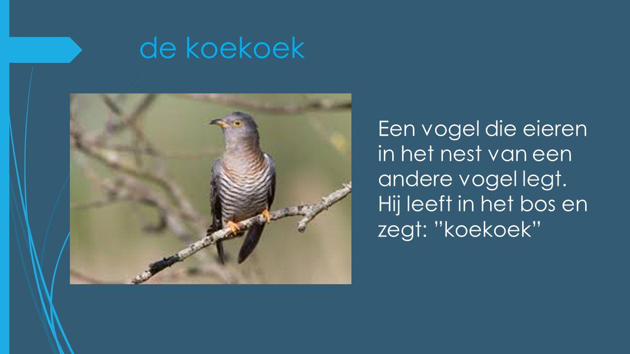 """de koekoek Een vogel die eieren in het nest van een andere vogel legt. Hij leeft in het bos en zegt: """"koekoek"""""""