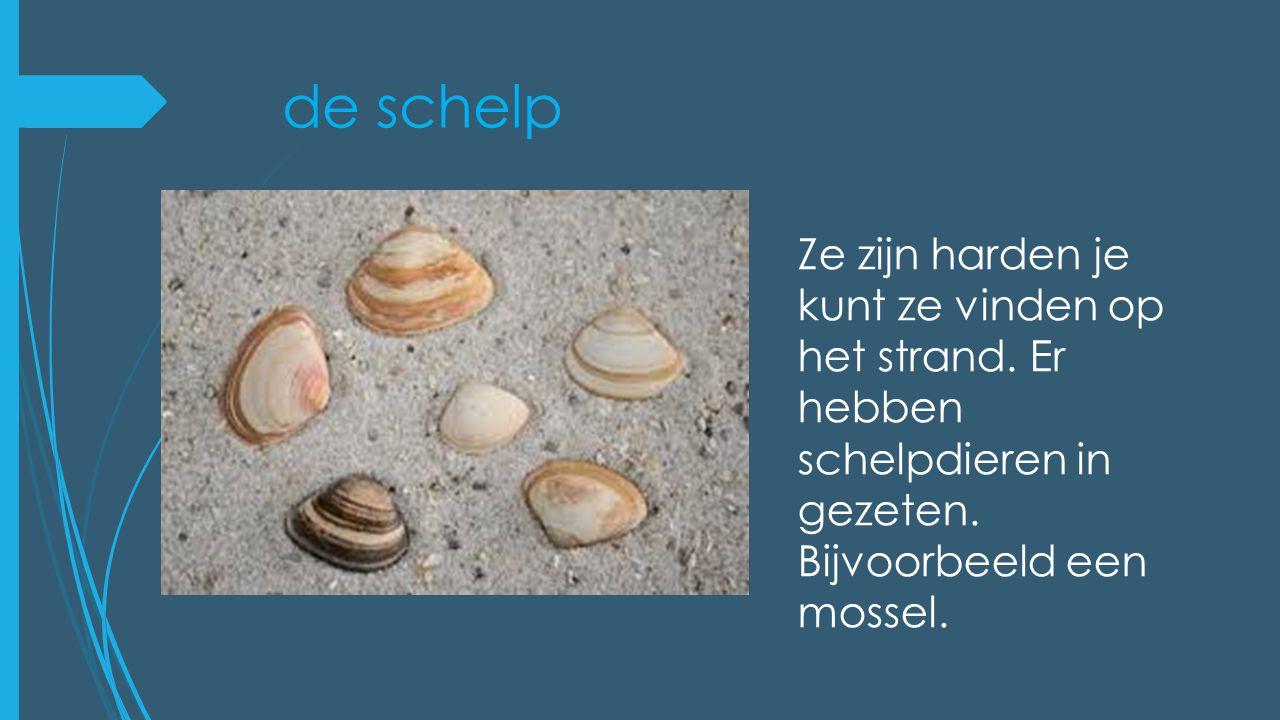 de schelp Ze zijn harden je kunt ze vinden op het strand. Er hebben schelpdieren in gezeten. Bijvoorbeeld een mossel.