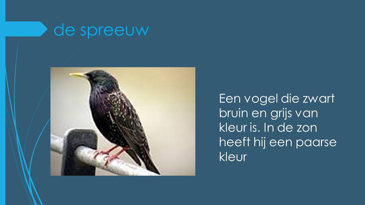 de spreeuw Een vogel die zwart bruin en grijs van kleur is. In de zon heeft hij een paarse kleur
