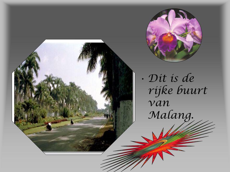 Aan beide zijden een breed betegeld voetpad dat tussen twee rijen reusachtige palmbomen loopt.