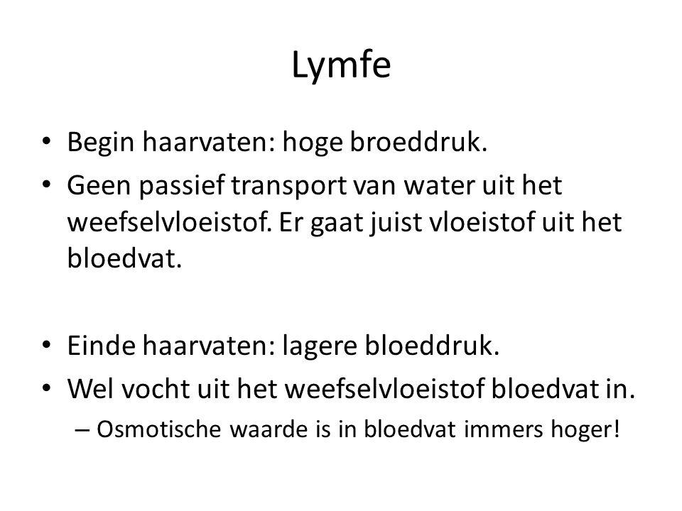 Lymfe Begin haarvaten: hoge broeddruk.Geen passief transport van water uit het weefselvloeistof.