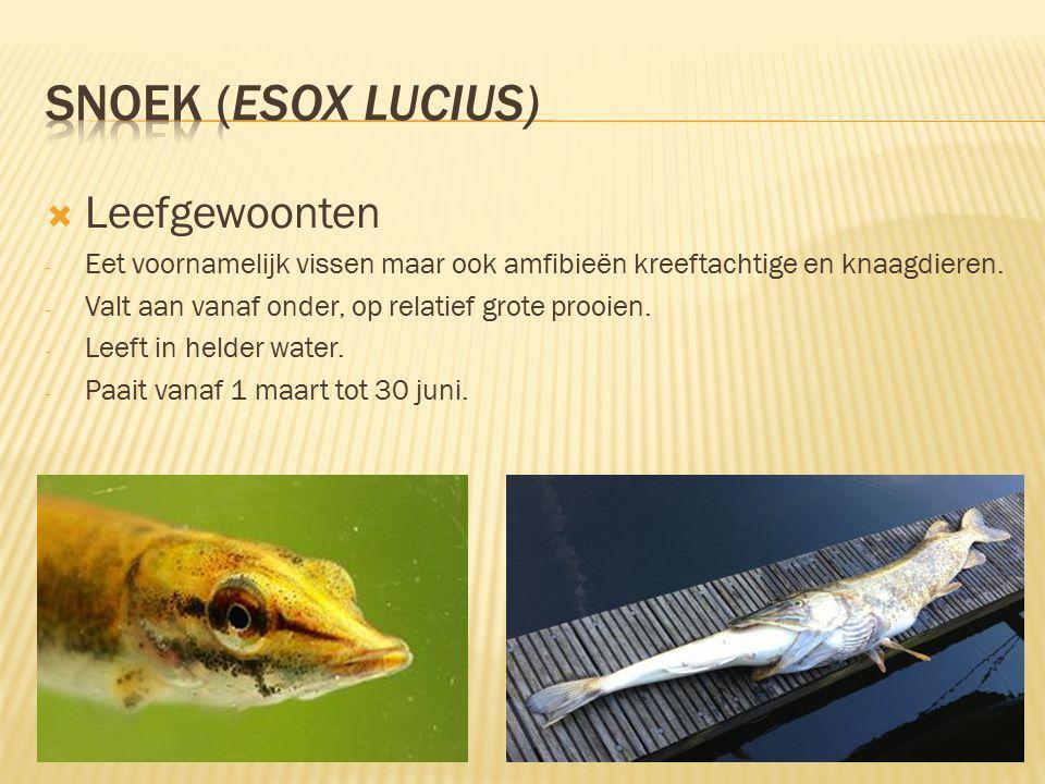  Leefgewoonten - Eet voornamelijk vissen maar ook amfibieën kreeftachtige en knaagdieren.