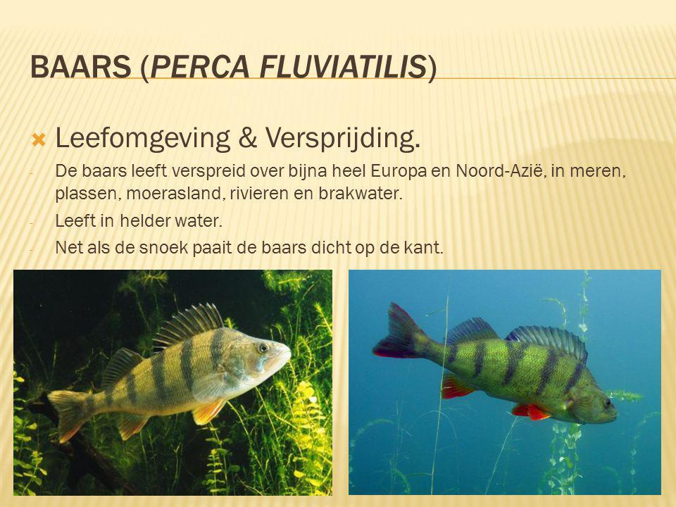 BAARS (PERCA FLUVIATILIS)  Leefomgeving & Versprijding.