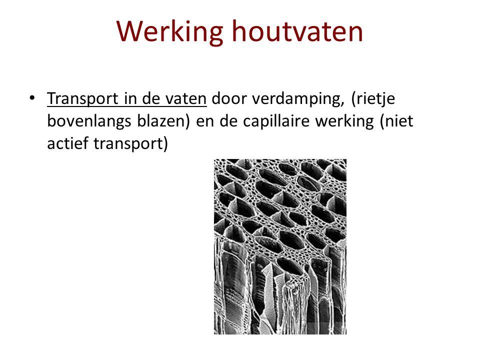 Werking houtvaten Transport in de vaten door verdamping, (rietje bovenlangs blazen) en de capillaire werking (niet actief transport)