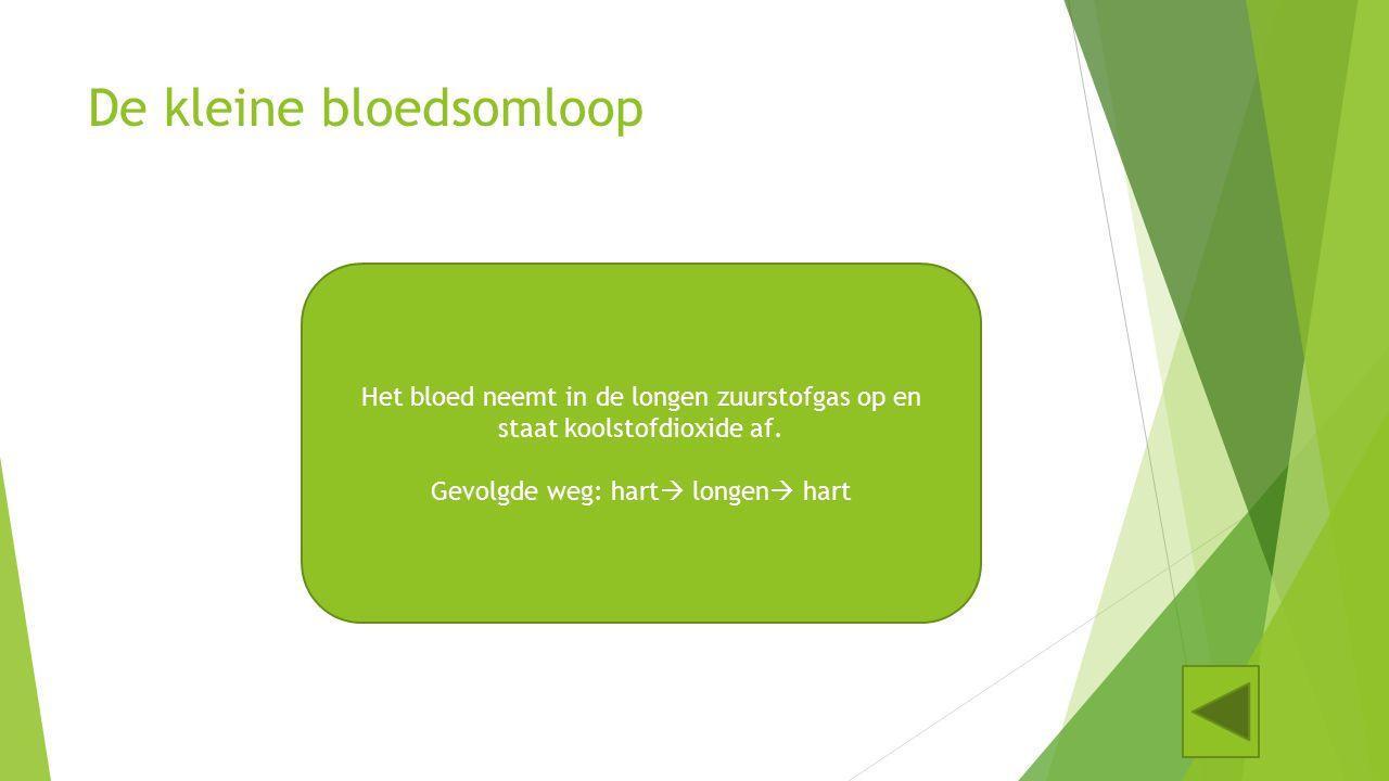 5. De bloedsomloop Klik op de afbeelding waarop de kleine bloedsomloop omcirkelt is voor meer uitleg. Doe hetzelfde bij de grote bloedsomloop!