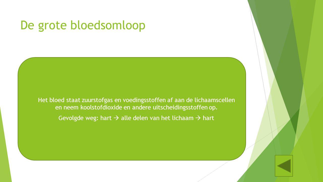 De kleine bloedsomloop Het bloed neemt in de longen zuurstofgas op en staat koolstofdioxide af. Gevolgde weg: hart  longen  hart