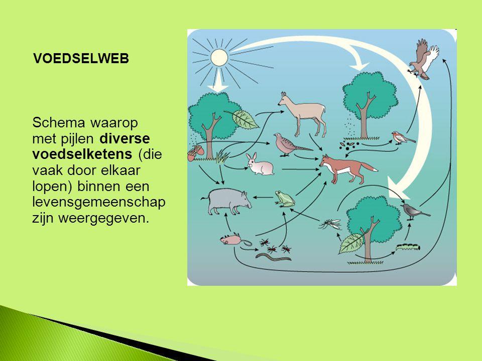 Schema waarop met pijlen diverse voedselketens (die vaak door elkaar lopen) binnen een levensgemeenschap zijn weergegeven.