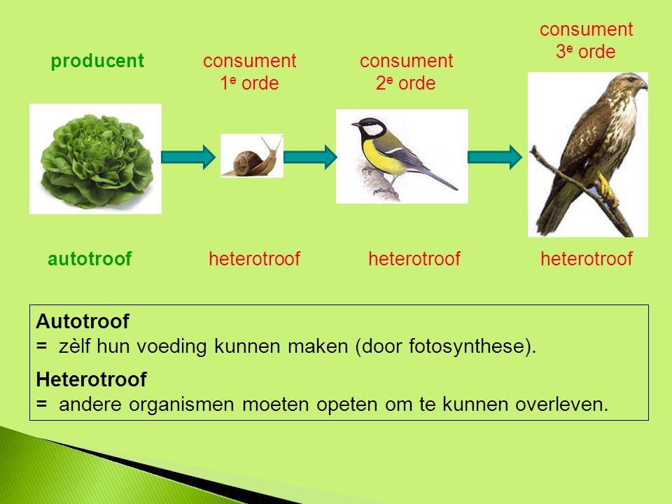 producentconsument 1 e orde consument 2 e orde consument 3 e orde Autotroof = zèlf hun voeding kunnen maken (door fotosynthese).