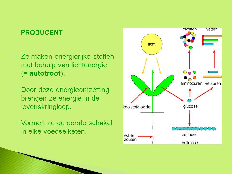 Ze maken energierijke stoffen met behulp van lichtenergie (= autotroof).