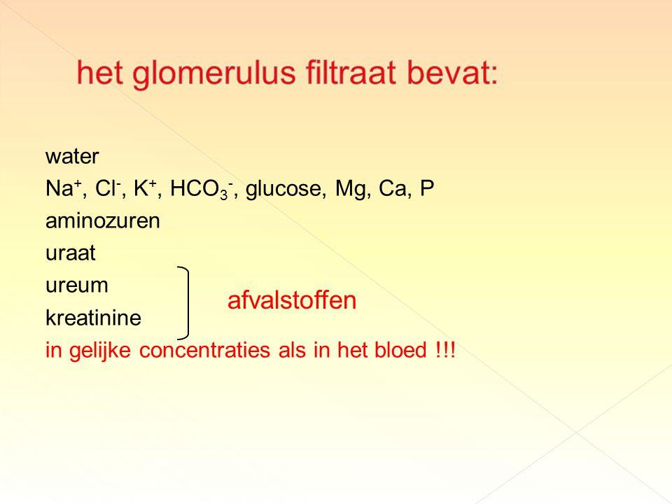 water Na +, Cl -, K +, HCO 3 -, glucose, Mg, Ca, P aminozuren uraat ureum kreatinine in gelijke concentraties als in het bloed !!.