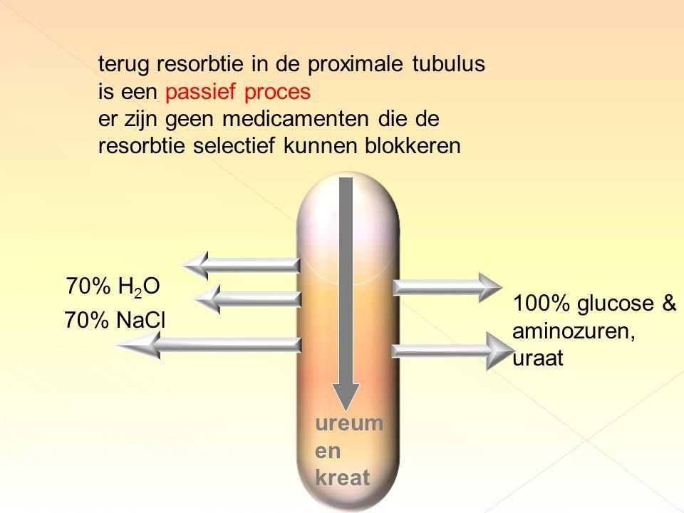 terug resorbtie in de proximale tubulus is een passief proces er zijn geen medicamenten die de resorbtie selectief kunnen blokkeren ureum en kreat 70% H 2 O 70% NaCl 100% glucose & aminozuren, uraat