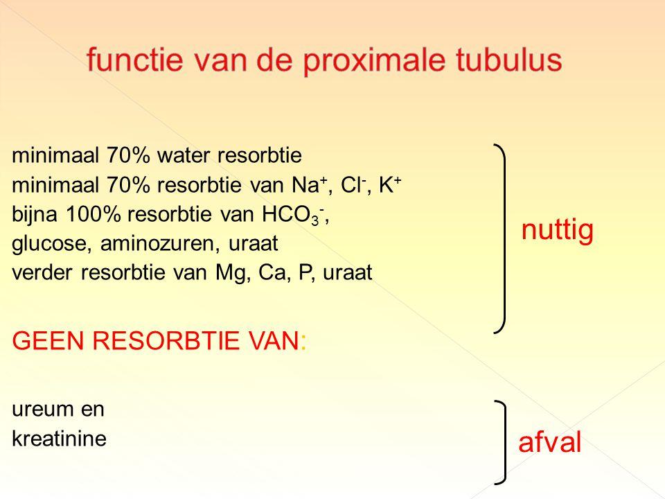 minimaal 70% water resorbtie minimaal 70% resorbtie van Na +, Cl -, K + bijna 100% resorbtie van HCO 3 -, glucose, aminozuren, uraat verder resorbtie van Mg, Ca, P, uraat GEEN RESORBTIE VAN : ureum en kreatinine nuttig afval
