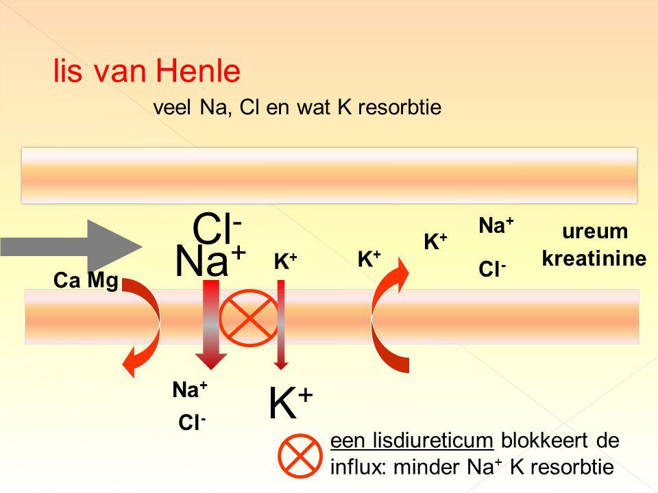veel Na, Cl en wat K resorbtie Na + Cl - ureum kreatinine K+K+ Na + Cl - K+K+ een lisdiureticum blokkeert de influx: minder Na + K resorbtie K+K+ Na + Cl - Ca lis van Henle K+K+ Mg