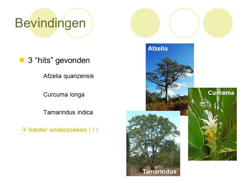 Bevindingen 3 hits gevonden Afzelia quanzensis Curcuma longa Tamarindus indica  Verder onderzoeken .