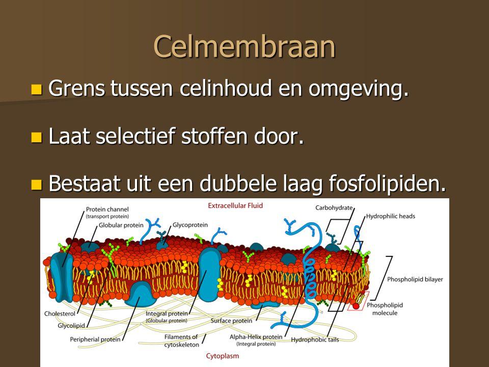 Celmembraan Grens tussen celinhoud en omgeving. Grens tussen celinhoud en omgeving. Laat selectief stoffen door. Laat selectief stoffen door. Bestaat