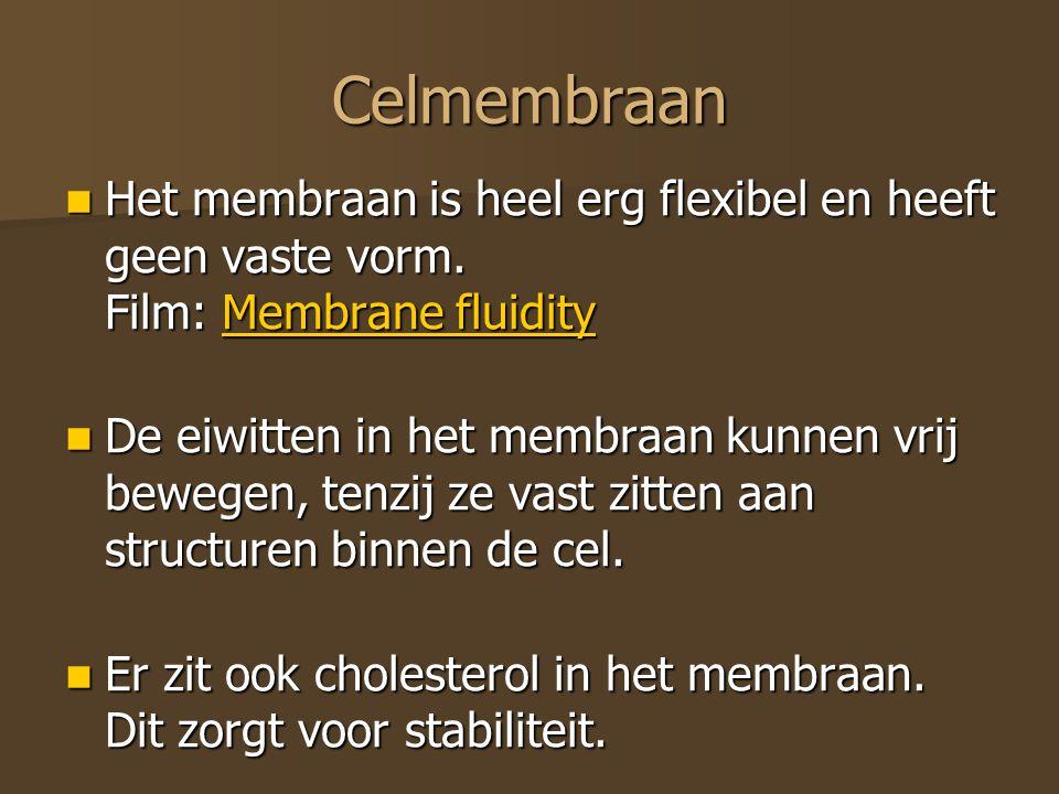 Celmembraan Het membraan is heel erg flexibel en heeft geen vaste vorm. Film: Membrane fluidity Het membraan is heel erg flexibel en heeft geen vaste