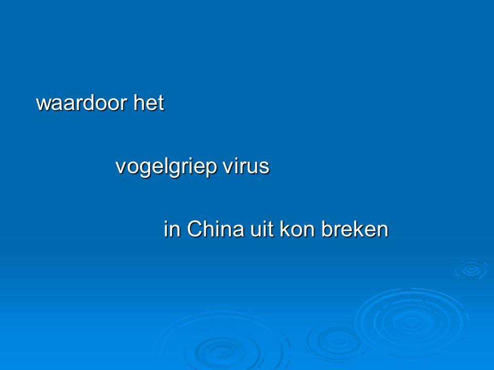 waardoor het waardoor het vogelgriep virus vogelgriep virus in China uit kon breken in China uit kon breken