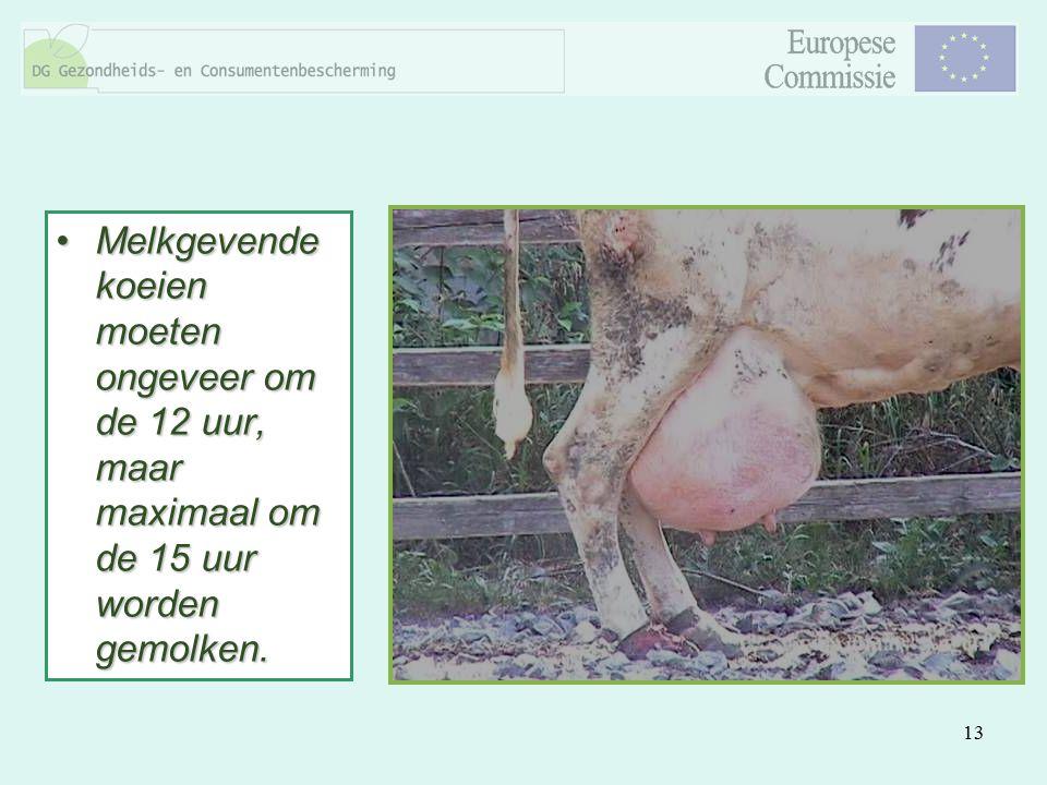 13 Melkgevende koeien moeten ongeveer om de 12 uur, maar maximaal om de 15 uur worden gemolken.Melkgevende koeien moeten ongeveer om de 12 uur, maar m