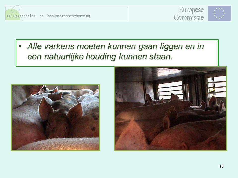 48 Alle varkens moeten kunnen gaan liggen en in een natuurlijke houding kunnen staan.Alle varkens moeten kunnen gaan liggen en in een natuurlijke houd