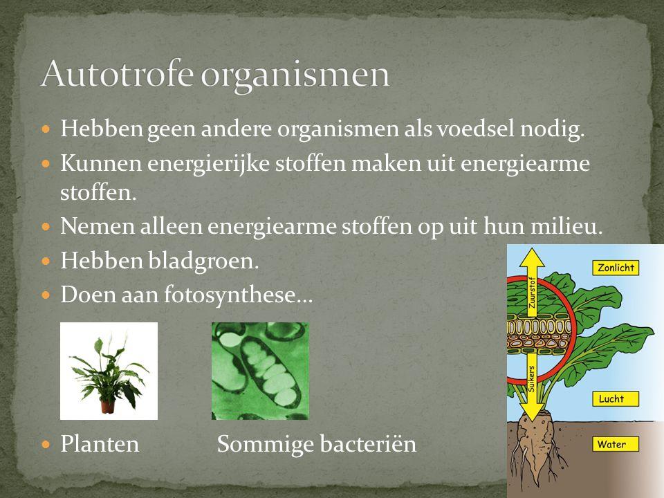 Hebben geen andere organismen als voedsel nodig.