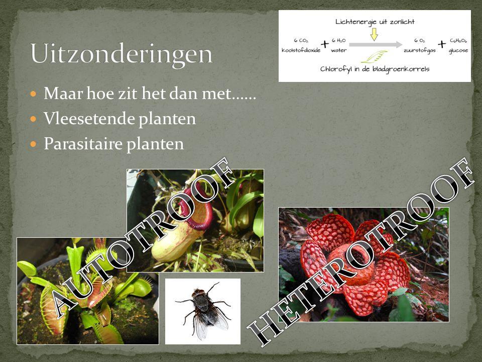 Maar hoe zit het dan met…… Vleesetende planten Parasitaire planten